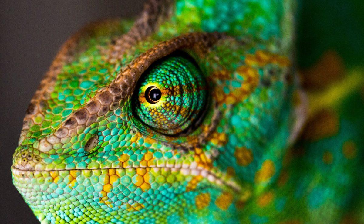 Chameleonas